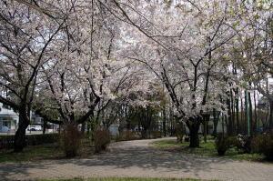 区内の花の見どころ/札幌市白石区